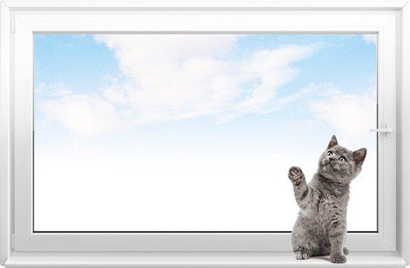 Кот и пластиковое окно